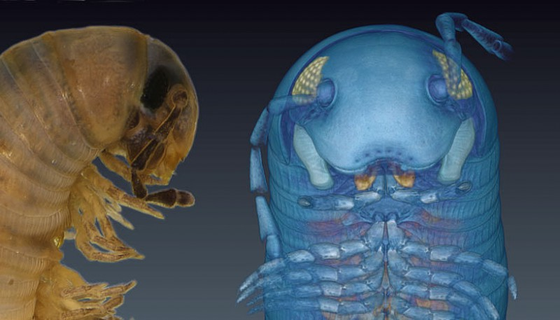 Thanks to special 3D technology rare insect species can now be digitally explore